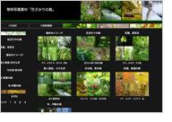 無料写真素材「花ざかりの森」